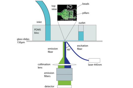 Sensor Assay Microbe Systems